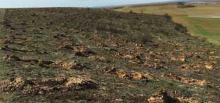Reforestación en Corbillos de los Oteros